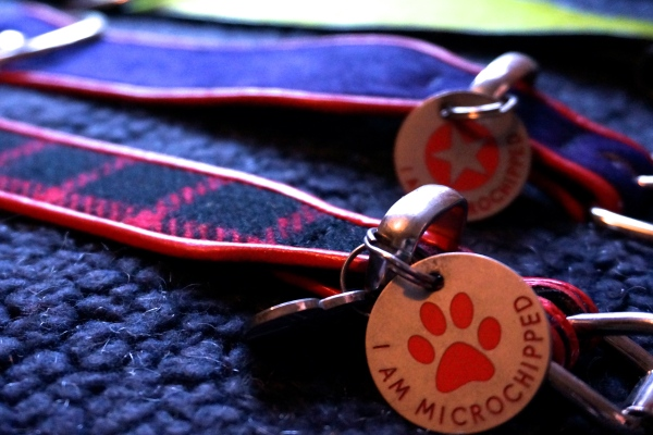 Holly&Lil collar tag